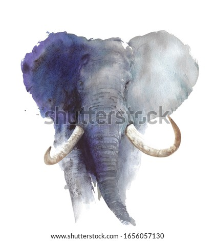 Elephant head portrait African wildlife endangered specie safari animal watercolor painting illustration isolated on white background