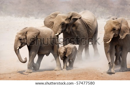 Elephant herd approaching over dusty plains of Etosha