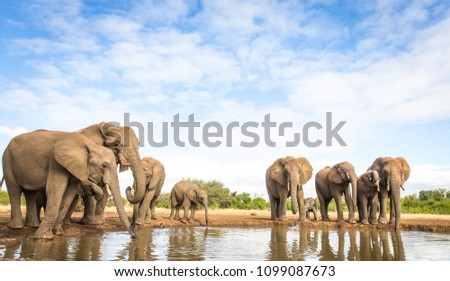 elephant herd at the water hole #1099087673