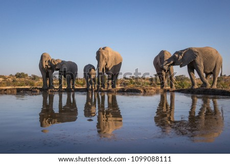 elephant herd at the water hole #1099088111