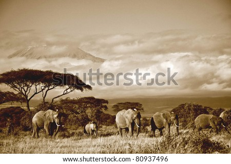 Elephant herd in front of Mt. Kilimanjaro in sepia