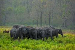Elephant herd in Kerala forest