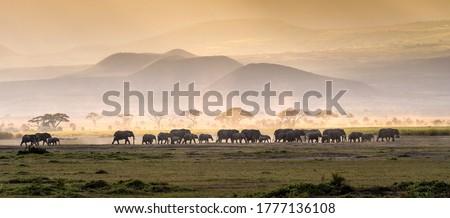 Elephant herd in savanna serengeti panoramic of wild life ストックフォト ©