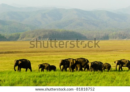 Elephant herd in the grassland