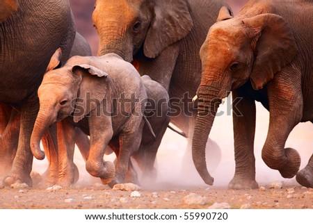 Elephant herd on the run in Etosha desert