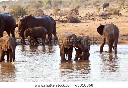Elephant herd play at waterhole in Africa