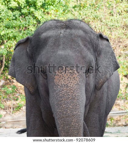 Elephant in a zoo