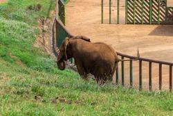 Elephant in a zoo of Spain