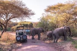 Elephant in beautiful landscape scenery of bush savannah - Game drive in Lake Manyara National Park, Wild Life Safari, Tanzania, Africa