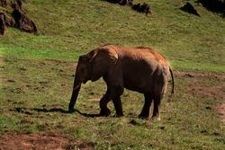 Elephant in Cabarceno. Natural park. Spain