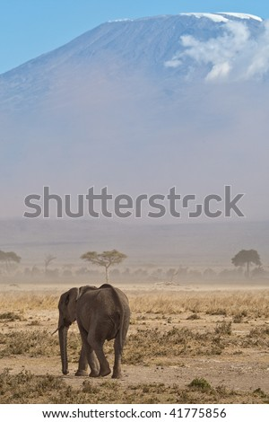 Elephant in front of mount kilimanjaro with a lot of dust in the air