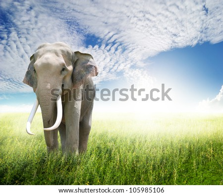 Elephant in green field and sun sky