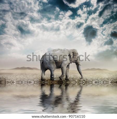 Elephant in the desert
