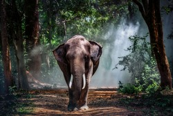 Elephant in the forest.Taken at Surin Province in Thailand.
