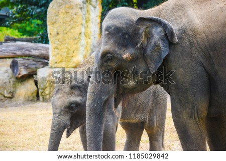 Stock Photo Elephant in the zoo
