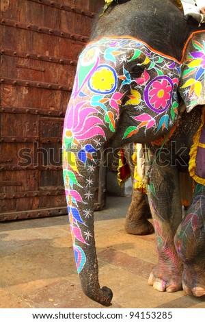 Elephant. India, Jaipur, state of Rajasthan.