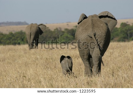 elephant mother and baby walking in grassland