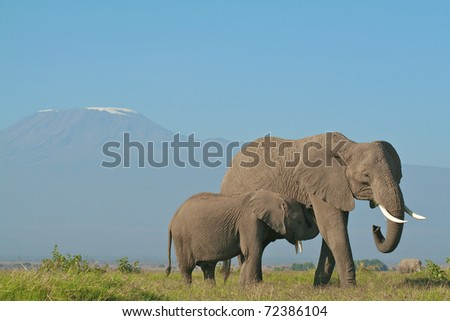 Elephant mother and calf below Mount Kilimanjaro, Kenya