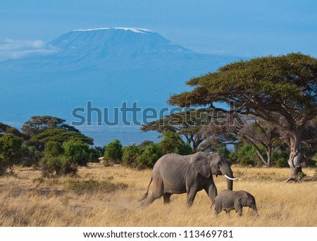 Elephant Mother and Son in Front of the Kilimanjaro Mountain
