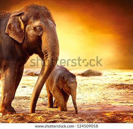 Elephant. Mother with Baby Elephants Walking Outdoors over Sunset #124509058