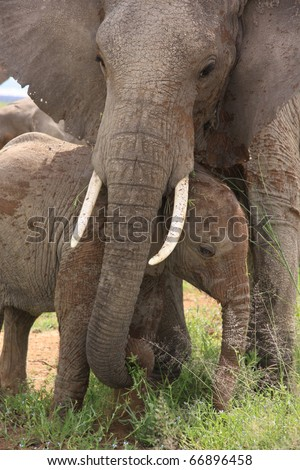 Elephant mother with young calf