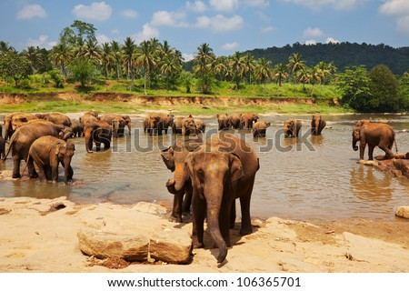 Elephant  on Sri Lanka - stock photo