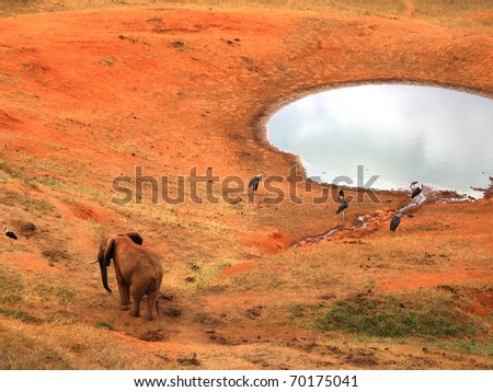 Elephant on the red savannah with birds