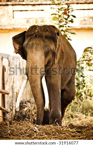 Elephant Outside. Front View