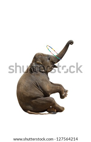 Elephant playing with a ring isolated against white background. With Clipping path