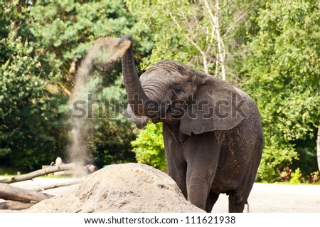 elephant playing with sand