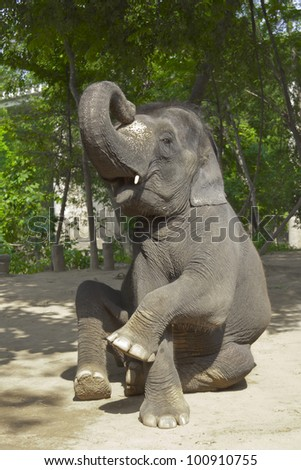 Elephant poses. Charming and cute elephant is posing for photo at the show in Thailand