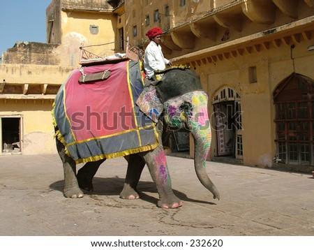 Elephant Ride at Jaipur, India.