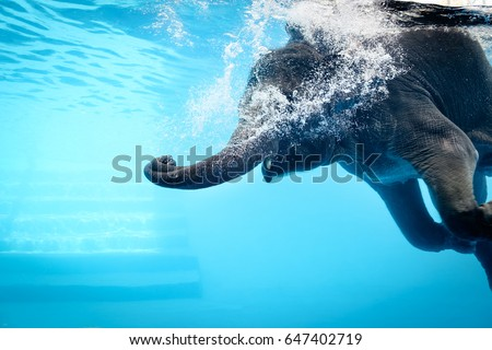 Elephant show swimming and blow the bubbles out of the trunk underwater vivid blue color in Thailand. #647402719