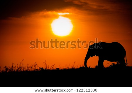 Elephant silhouette against the African sunset