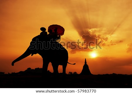 stock photo : elephant silhouette in thailand