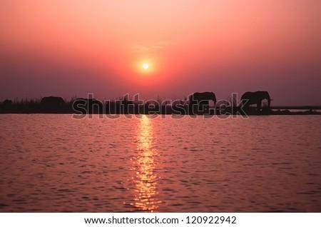 Elephant silhouette. Lake Kariba, Zimbabwe