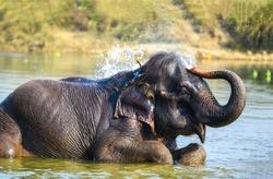 Elephant spraying water bath in Thailand