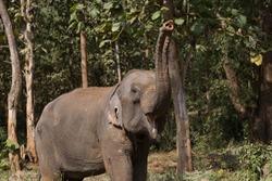 Elephant standing under tree in Laos elephant sanctuary