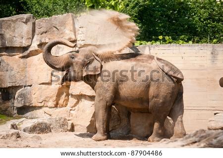 elephant taking a sandbath