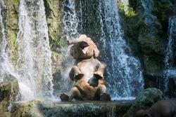 Elephant taking bath in waterfalls