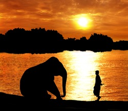 elephant training in thailand during sunset silhouetted