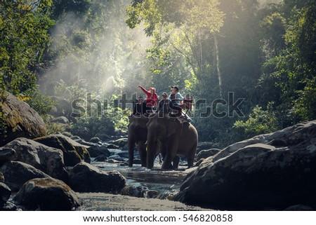 Elephant trekking through jungle #546820858