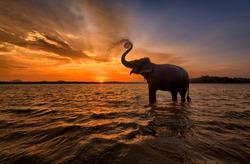 Elephant trunk up at Sunset Sri Lanka