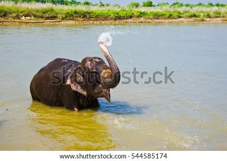 elephant water spray #544585174