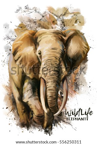 Elephant watercolor painting