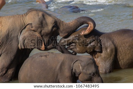 Elephant with baby in the water #1067483495