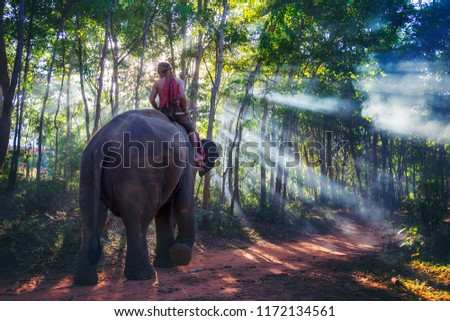 Stock Photo Elephant with mahout riding on top. Travel back home through the forest with the light of the sun shines through the beautiful.