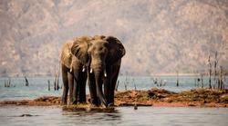 Elephants and Crocodile