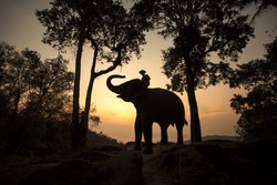 Elephants and mahouts in the morning a midst natural scenery.