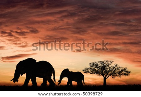 Elephants and the sunset in Africa